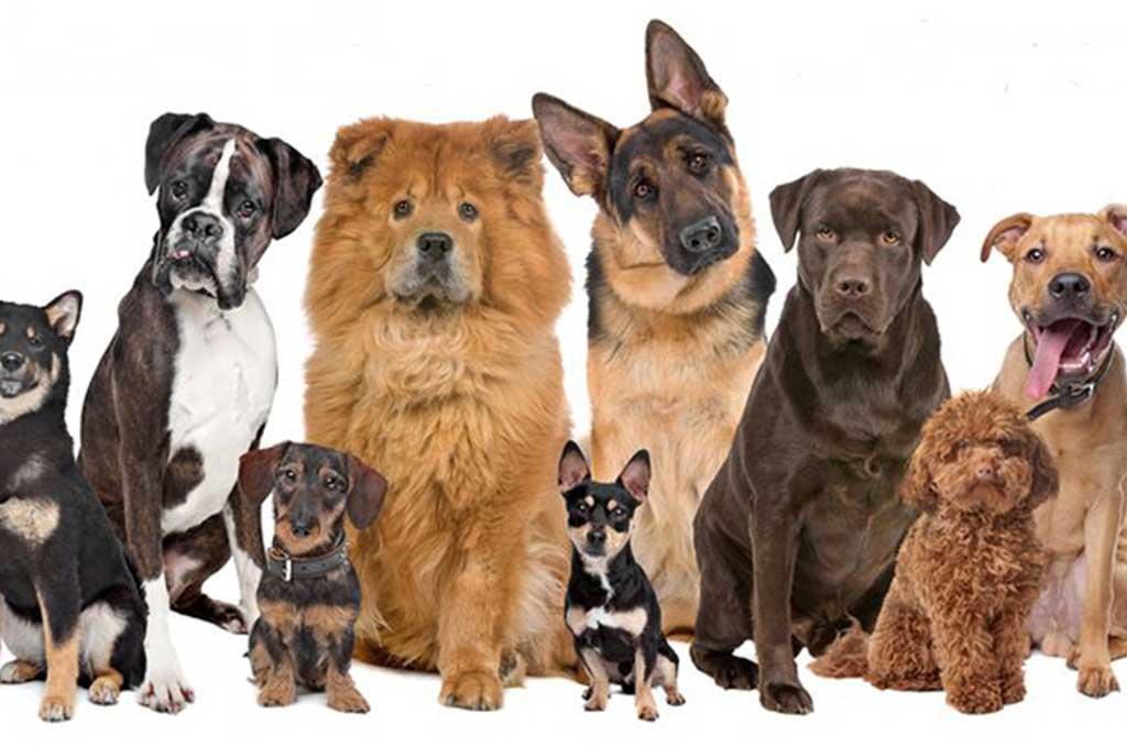 dog-school